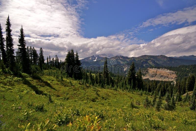 Zet het Nationale Park van Ranier, Washington State op stock foto's