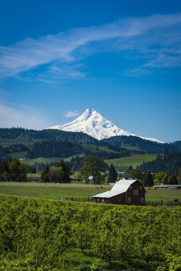 Zet Kap en appelboomgaarden in Oregon op royalty-vrije stock foto's