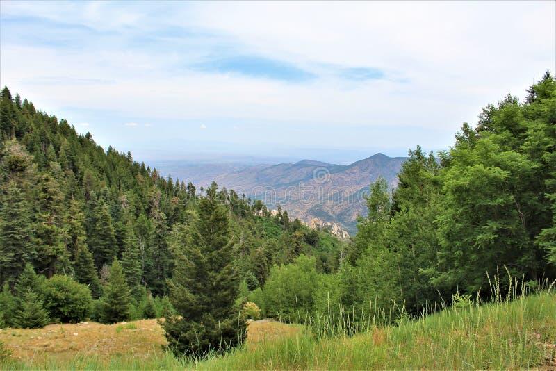 Zet Lemmon, Santa Catalina Mountains, het Nationale Bos van Coronado, Tucson, Arizona, Verenigde Staten op stock foto