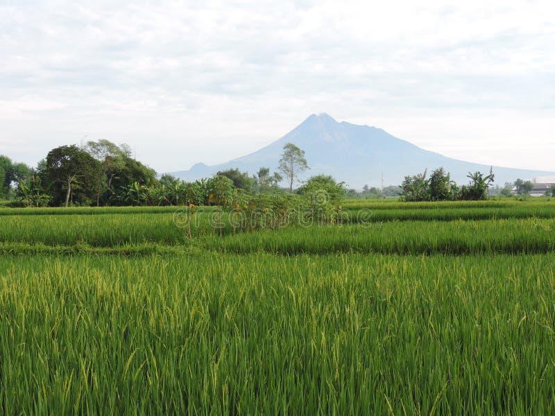 Zet Merapi Indonesië 9 Maart 2016 op stock foto's