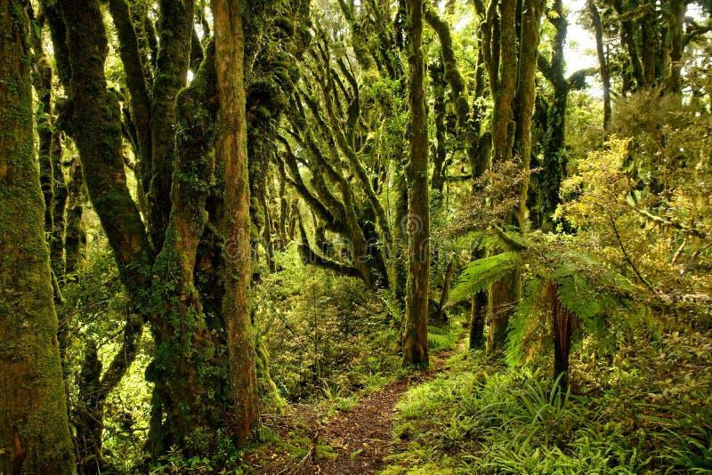 Zet Taranaki, vulkaan in het het noordeneiland op Nieuw Zeeland, meestal wordt de piek behandeld door wolken, met primaeval groen stock foto