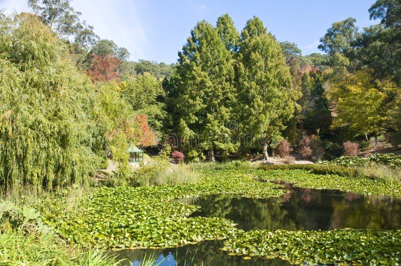 Zet Torenhoge Botanische Tuinen, Zuid-Australië op royalty-vrije stock fotografie
