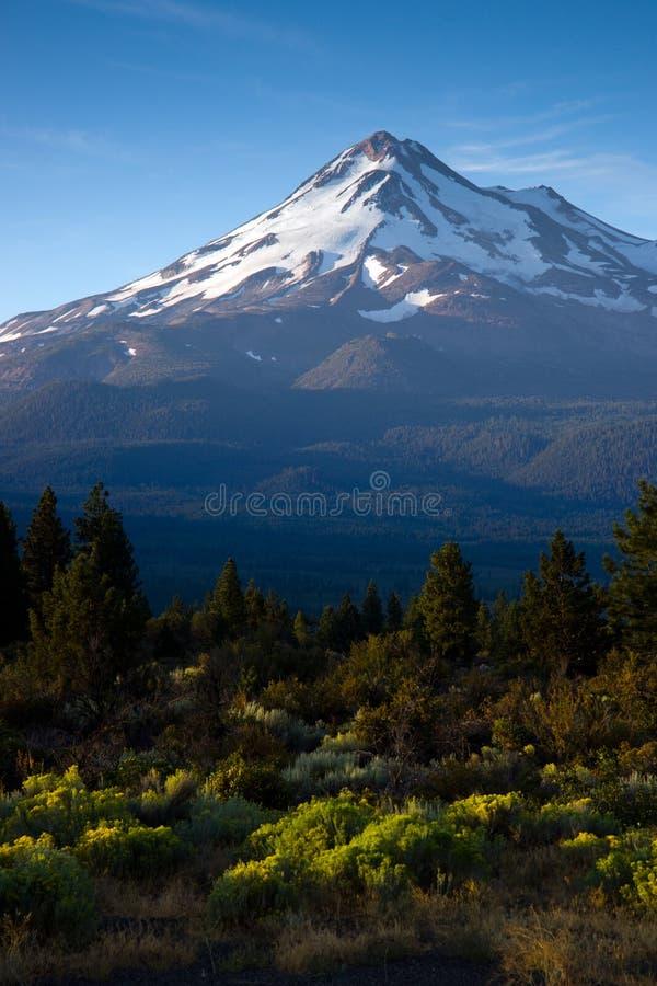 Zet Verticaal Shasta op royalty-vrije stock foto's