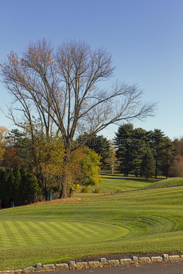 Zetten Groen in de Herfst stock foto