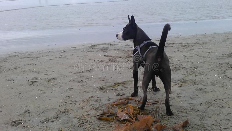 Zeus på stranden royaltyfria bilder