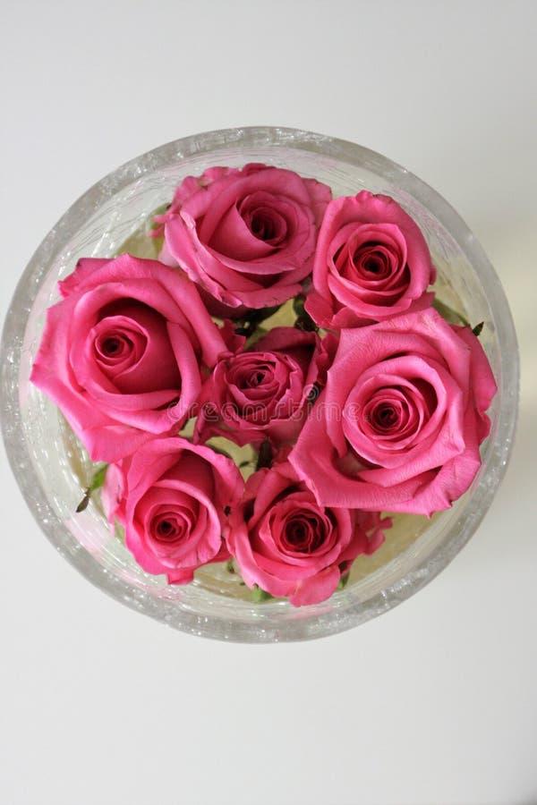 Zeven rozen in de vaas stock afbeeldingen