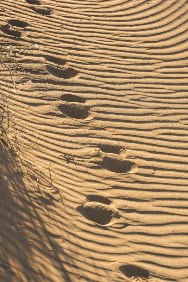 Zgłębia ślada na rowkowatym piasku obraz stock