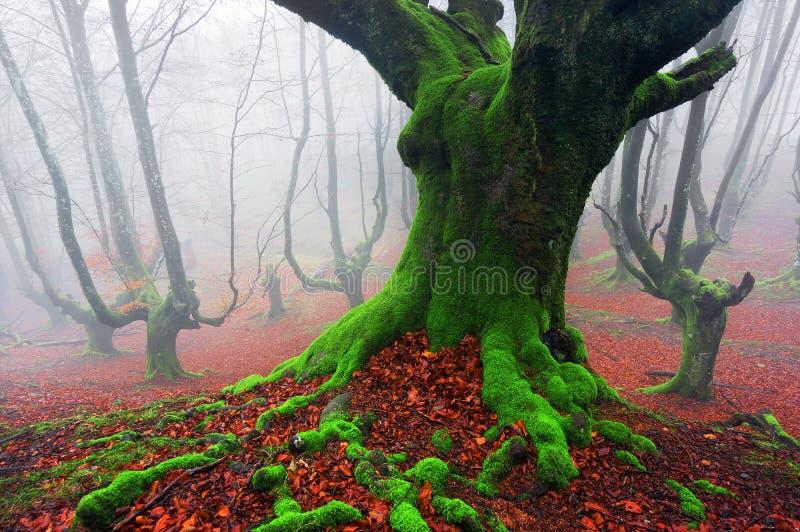 Zgłębia las obraz royalty free