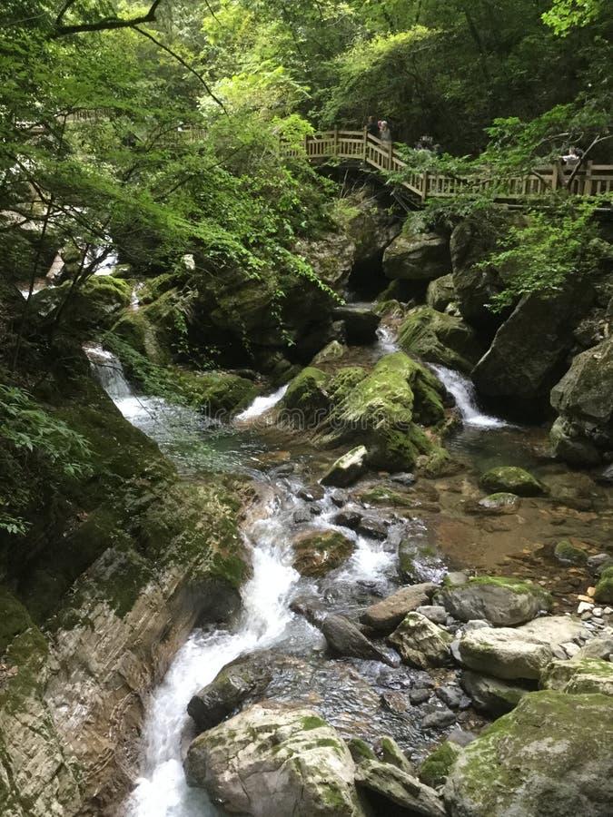 Zgłębia w zielonych drewnach, strumień stacza się nad białymi falami zdjęcie stock