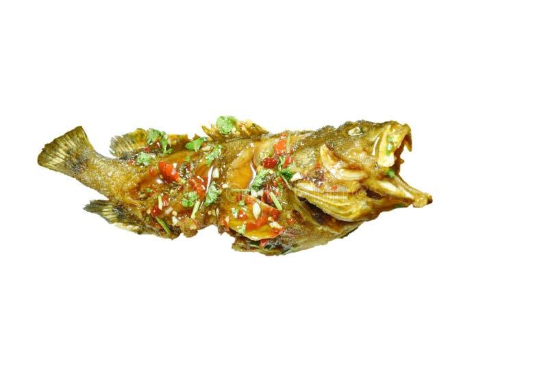 Zgłębiam smażył blacktip grouper ryby chili opatrunkowego słodkiego kumberland na białym tle fotografia royalty free