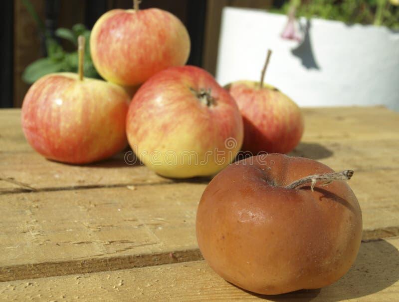 zgniłe jabłko fotografia royalty free