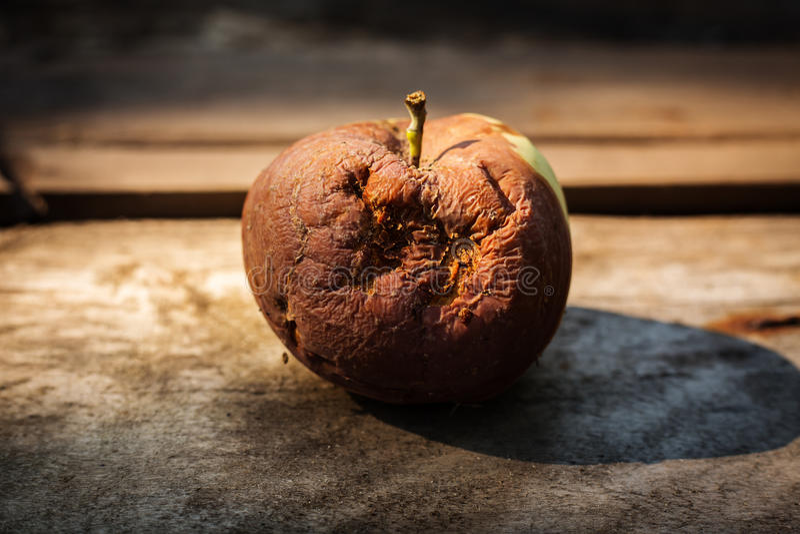 zgniłe jabłko obraz royalty free