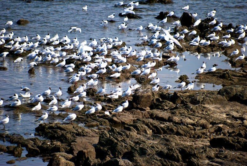 Zgromadzenia seagull