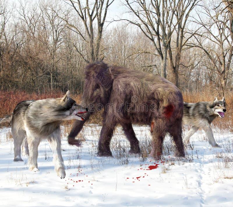 Zgubni wilki Tropi Nieletniego Zwełnionego mamuta ilustracja wektor