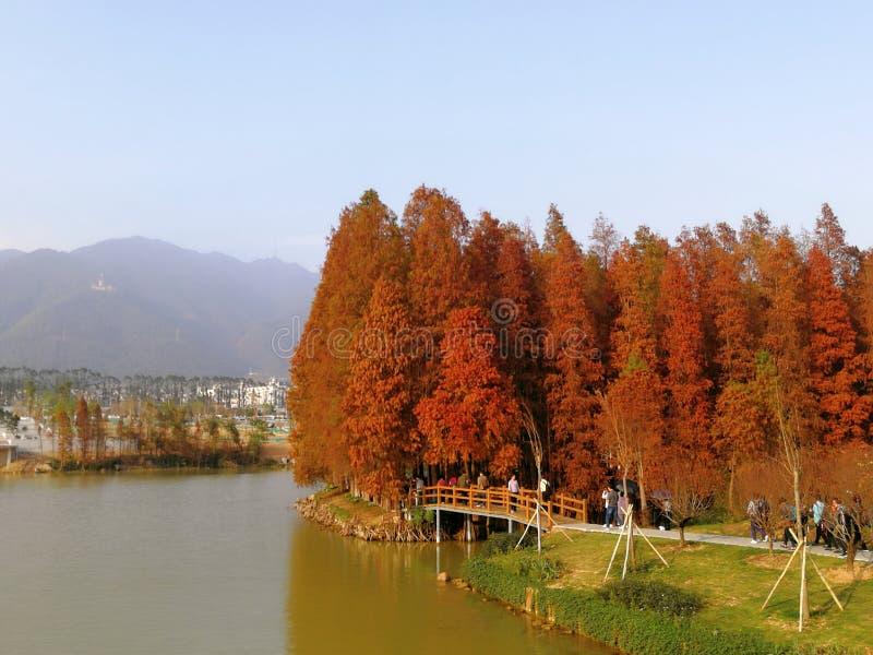 Zhaoqing, Guangdong, Cina fotografie stock libere da diritti