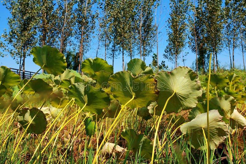 Zhengzhou Żółty Rzeczny bagna park zdjęcia royalty free