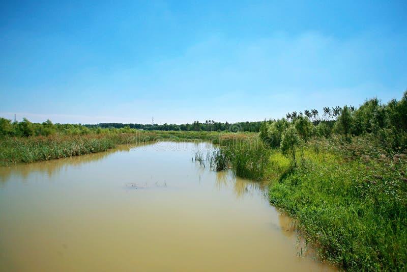 Zhengzhou Żółty Rzeczny bagna park fotografia stock