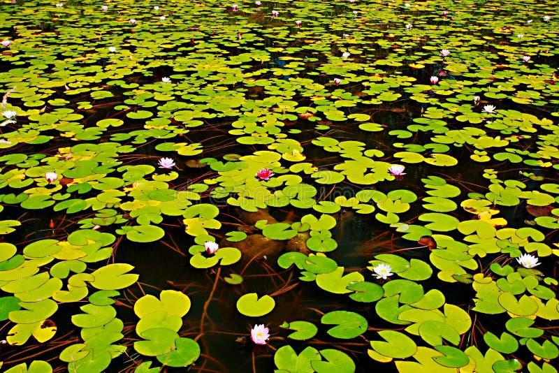 Zhengzhou Żółty Rzeczny bagna park obraz stock