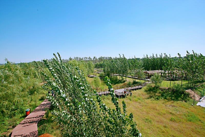 Zhengzhou Żółty Rzeczny bagna park zdjęcie stock