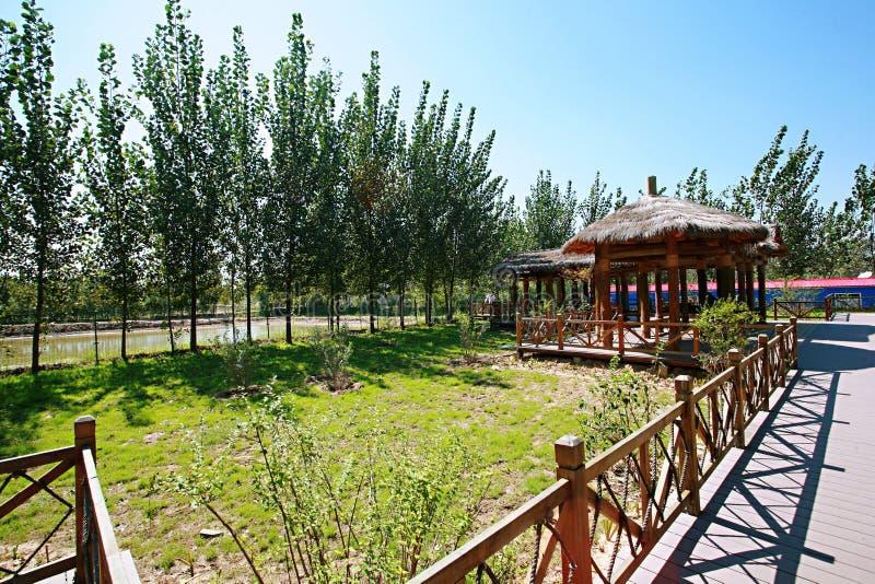Zhengzhou Żółty Rzeczny bagna park zdjęcie royalty free