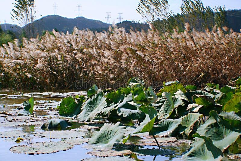 Zhengzhou Żółty Rzeczny Sceniczny teren obrazy royalty free