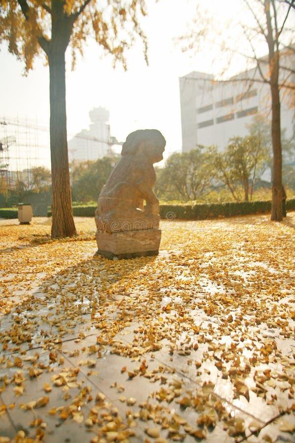 Zhengzhou people' parco di s immagini stock