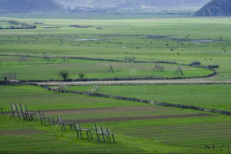 zhongdian的草原 图库摄影