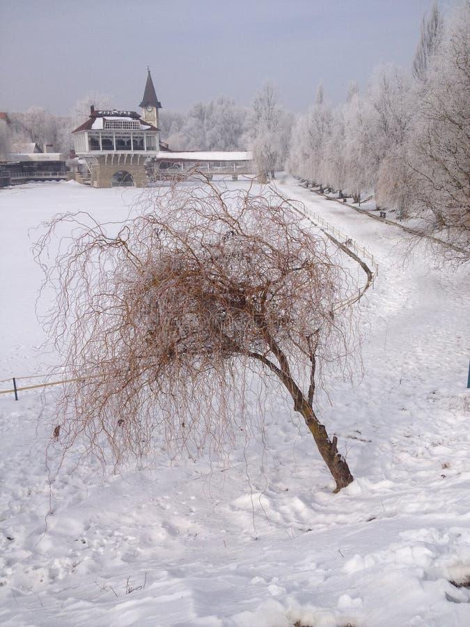 Zhovtneviy Park at winter-Ukraine Chernivtsi. stock photography