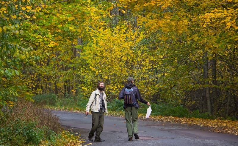 Zhytomyr, Ucrania - 19 de octubre de 2015: hombres que caminan en el bosque para las setas foto de archivo libre de regalías