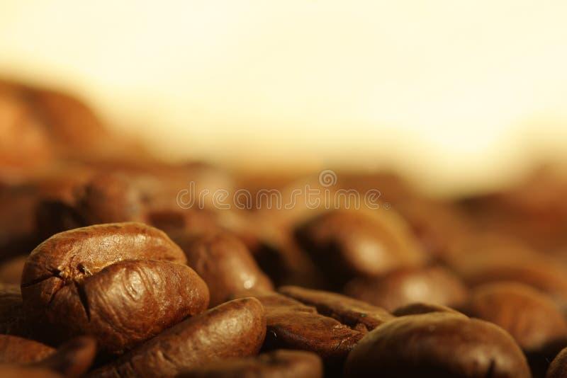 ziarna kawy kołek. zdjęcia stock