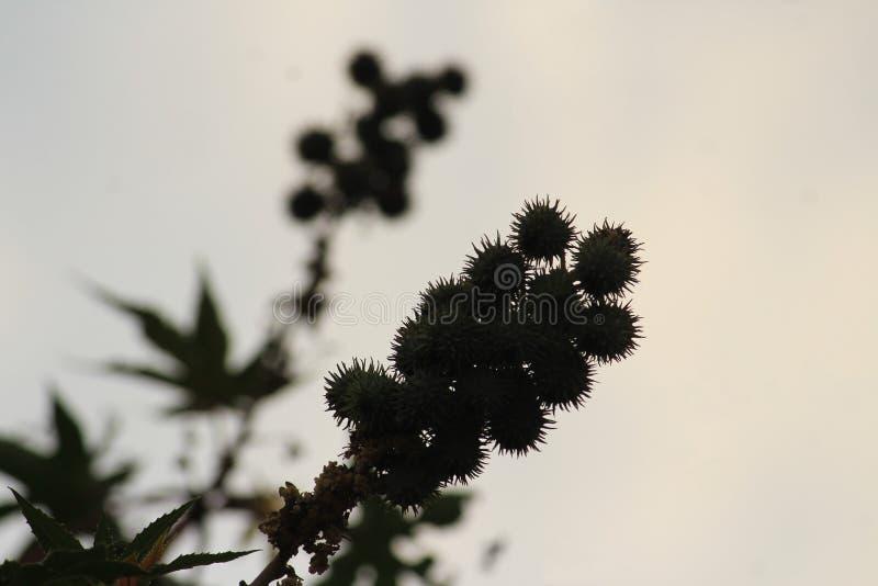 Ziarna, liście i cień, obrazy stock