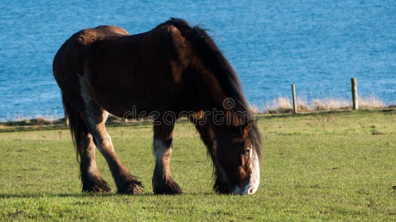 Zich bevindt geïsoleerdh paard stock afbeeldingen