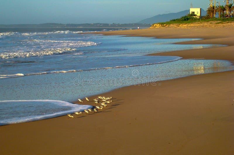 Zich spoedt om ontbijt op de vloed te vinden, RJ, Brazilië stock afbeeldingen