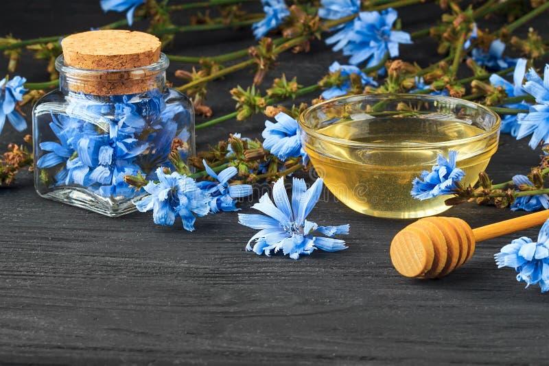Zichorie Cichorium intybus Kraut in der Flasche stockfotografie