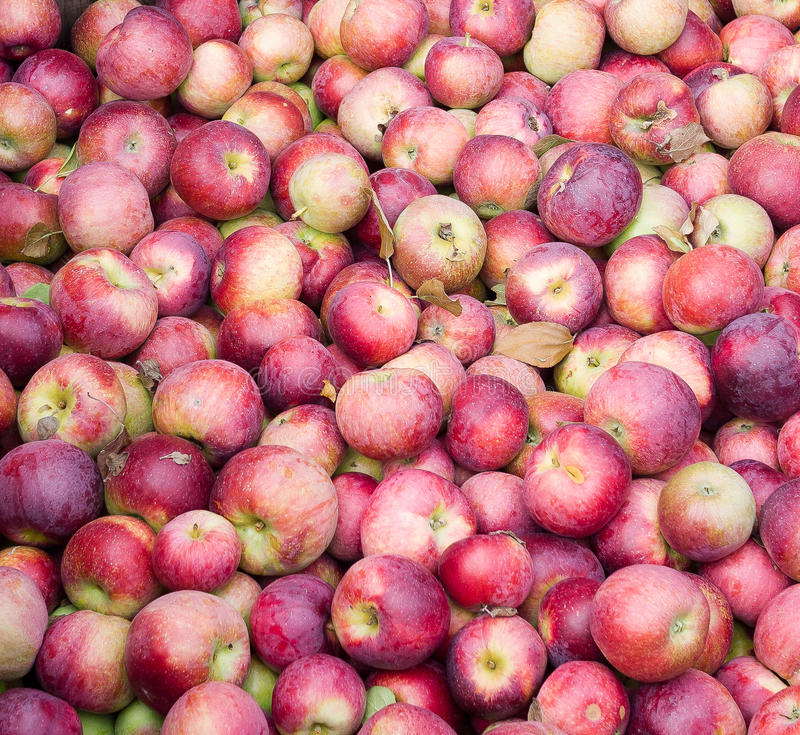 Zideräpfel lizenzfreie stockfotos