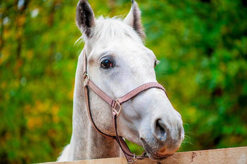 Zie een paard onder ogen bekijkend de camera stock fotografie