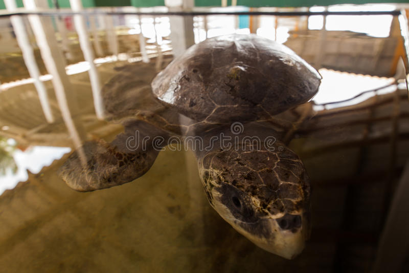 Zie schildpad royalty-vrije stock afbeeldingen