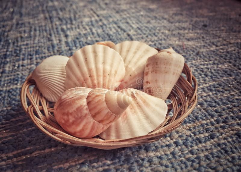 Zie shell stock fotografie