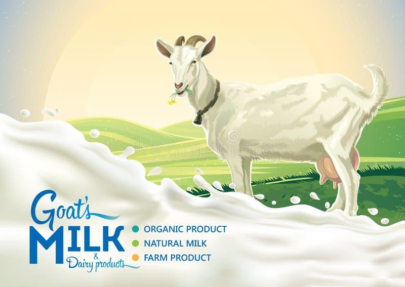 Ziege und Spritzen von Milch lizenzfreie abbildung
