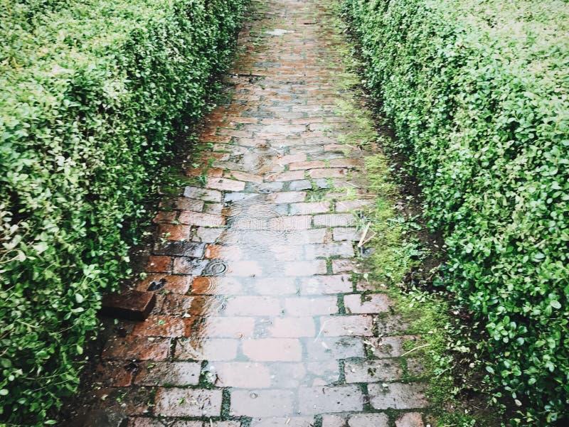 Ziegelstein-Weg im Regen lizenzfreie stockfotografie