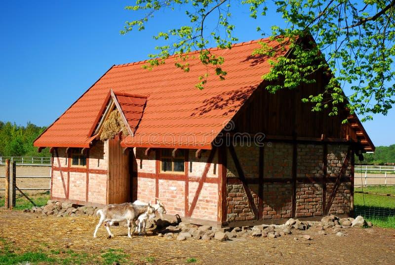 Ziegen auf dem Bauernhof stockbilder