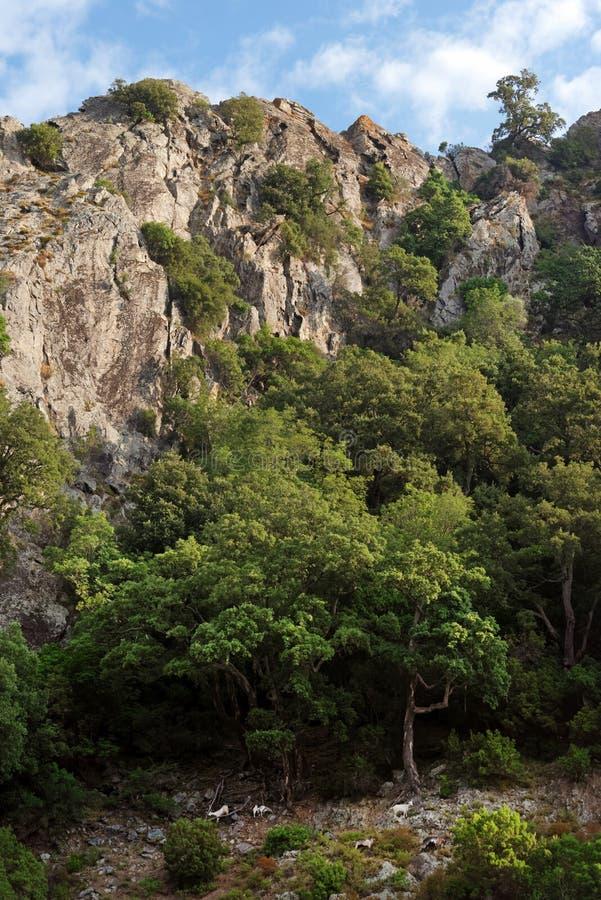 Ziegen in Korsika-Berg lizenzfreie stockfotos