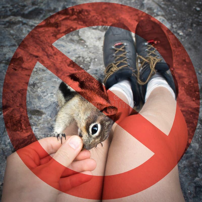 Ziehen Sie bitte ` t Zufuhrwild lebende tiere an! lizenzfreies stockfoto