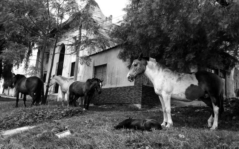 Ziek paard royalty-vrije stock foto
