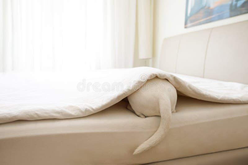 Ziek, zieke hond of slaap stock foto