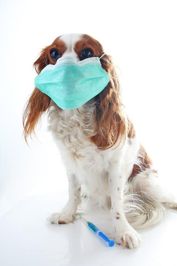 Download Zieke De Fotoillustratie Van Het Hondpuppy Het Dierlijke Huisdier Masker Van De Artsendierenarts Op Puppy Hond Met Injectieinenti Stock Foto - Afbeelding bestaande uit griep, injectie: 107708710
