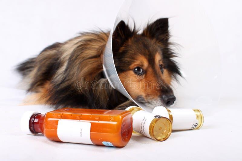 Zieke hond stock afbeelding