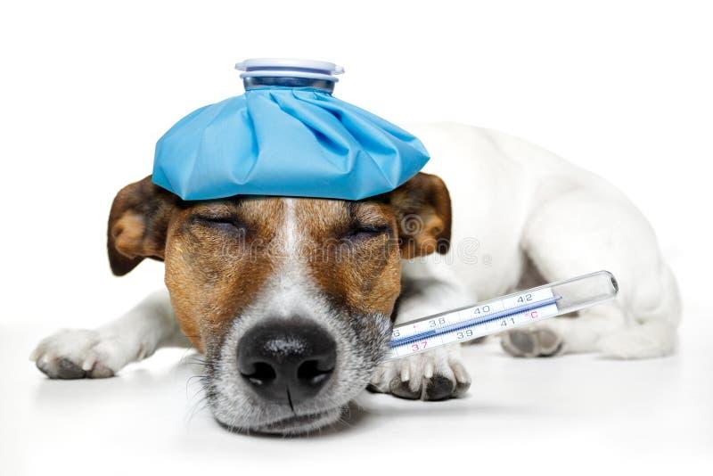 Zieke hond royalty-vrije stock fotografie