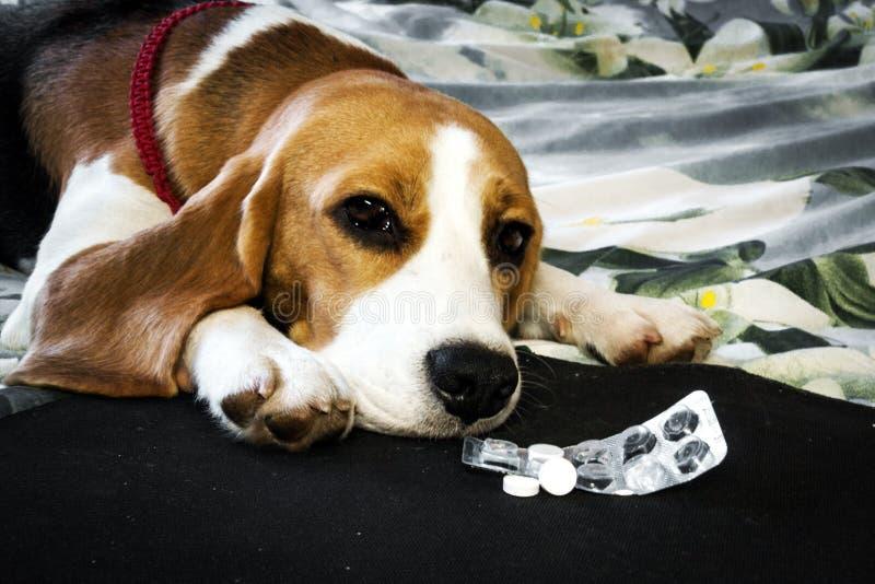Zieke hond met pillen stock fotografie