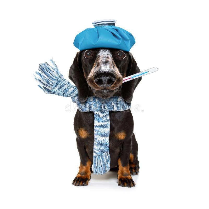 Zieke zieke hond met ziekte royalty-vrije stock fotografie